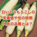 白いとうもろこしの栄養や旬の時期について。人気の品種は?