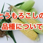 とうもろこしの品種について。食用と飼料用の具体例は?