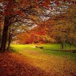 秋を感じさせる有名な和歌を5つご紹介。