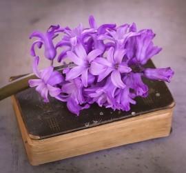 flower-1396437_640