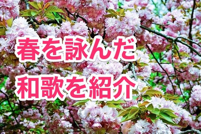 cherry-blossom-1346628_640