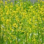 花を読んだ有名な俳句とその意味を5つ解説!